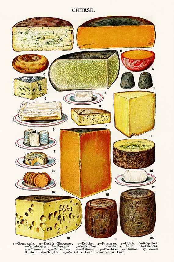 FO3 Vintage Cheese Illustration, Printable Antique Image