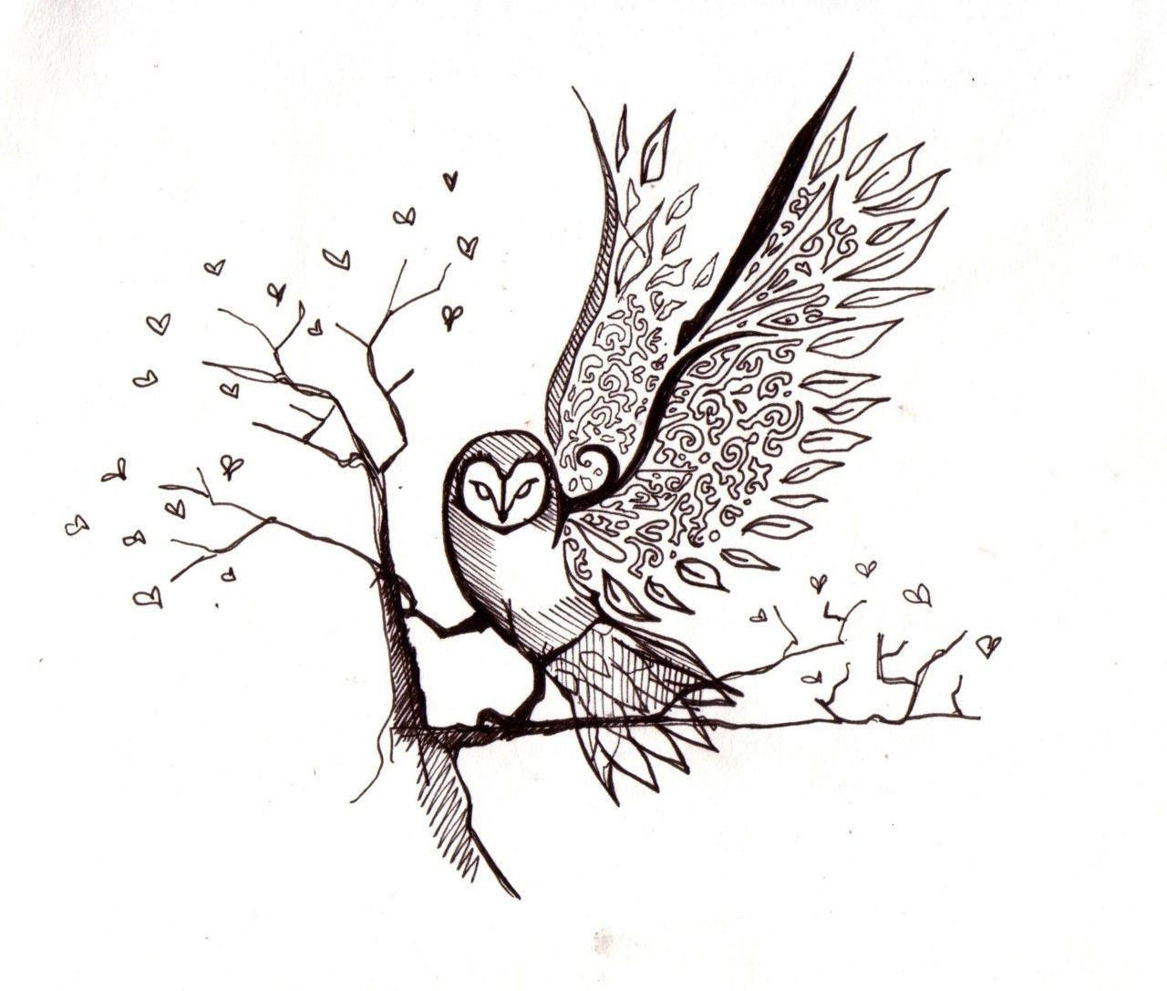 Flying Owl Sketch images | drawing | Pinterest | Owl ...