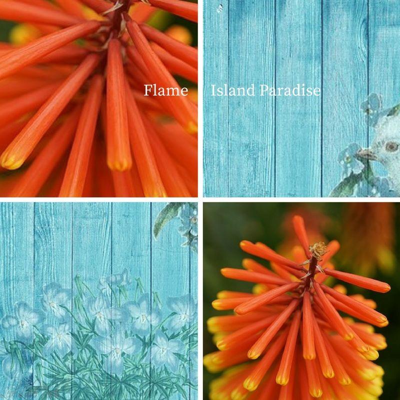 Trendfarben 2017 Frühling/Sommer Flame & Island Paradise