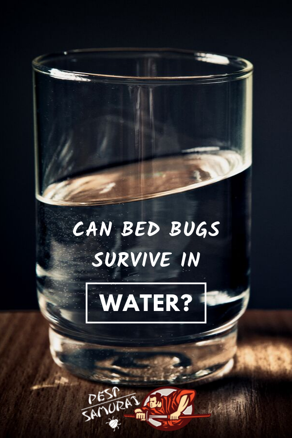 Do bed bugs like water or do they even drink water? In