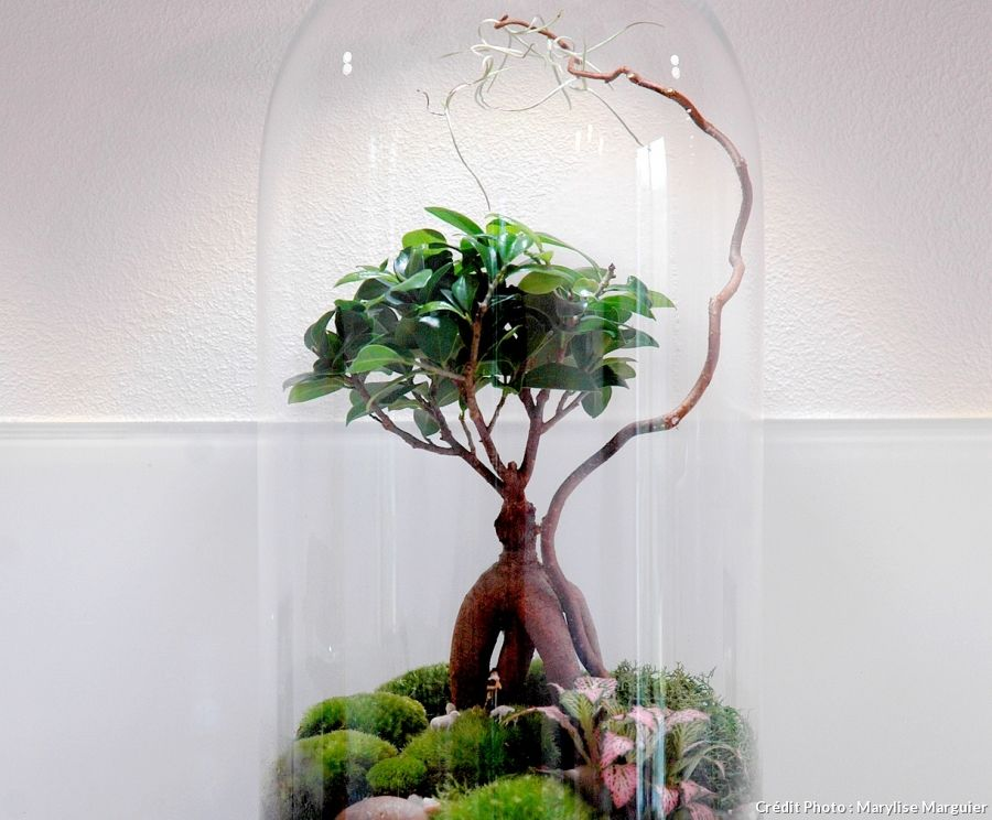 comment faire un terrarium humide en 8 tapes terrarium bonsa et bocal. Black Bedroom Furniture Sets. Home Design Ideas