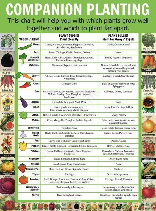 Companion Planting What Not To Plant Together  The Whoot