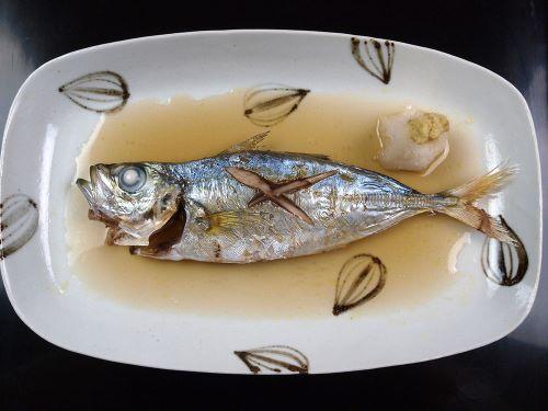 メアジ  ぼうずコンニャク 新市場魚類図鑑より