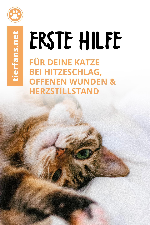 Erste Hilfe Fur Deine Katze In 2020 Tierarzt Tiere