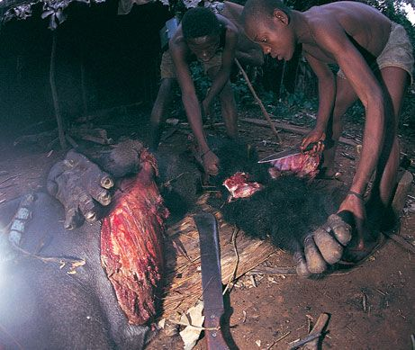 habitações curiosas tribo africa - Pesquisa Google