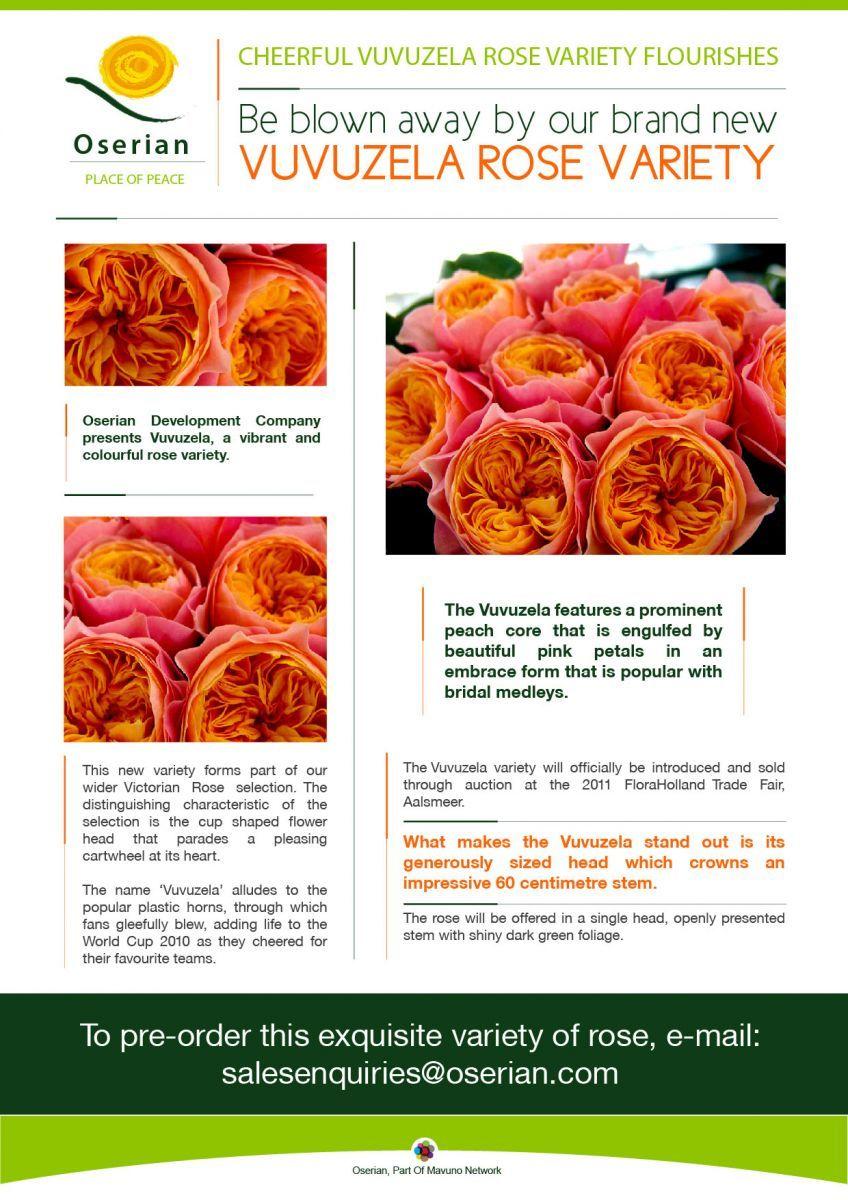 Oserian introduces vuvuzela rose variety flower faves pinterest oserian introduces vuvuzela rose variety rose varietiescut flowersspring mightylinksfo