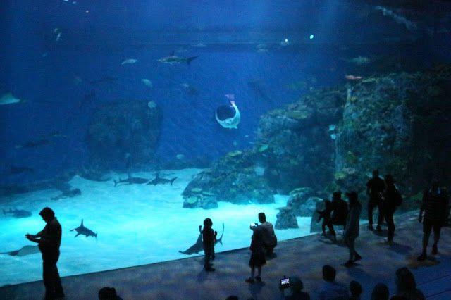 Prinsessat maailmalla: Pohjois-Euroopan suurimmassa akvaariossa Kööpenhaminassa