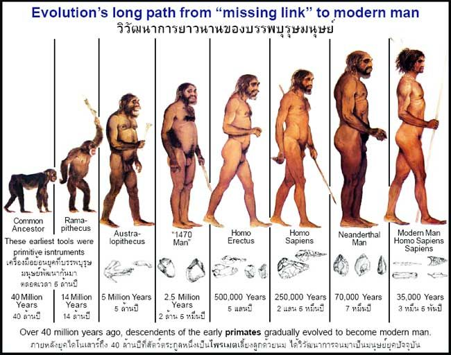 The Evolution of man on earth 1.Stand erect 2. Development of ...