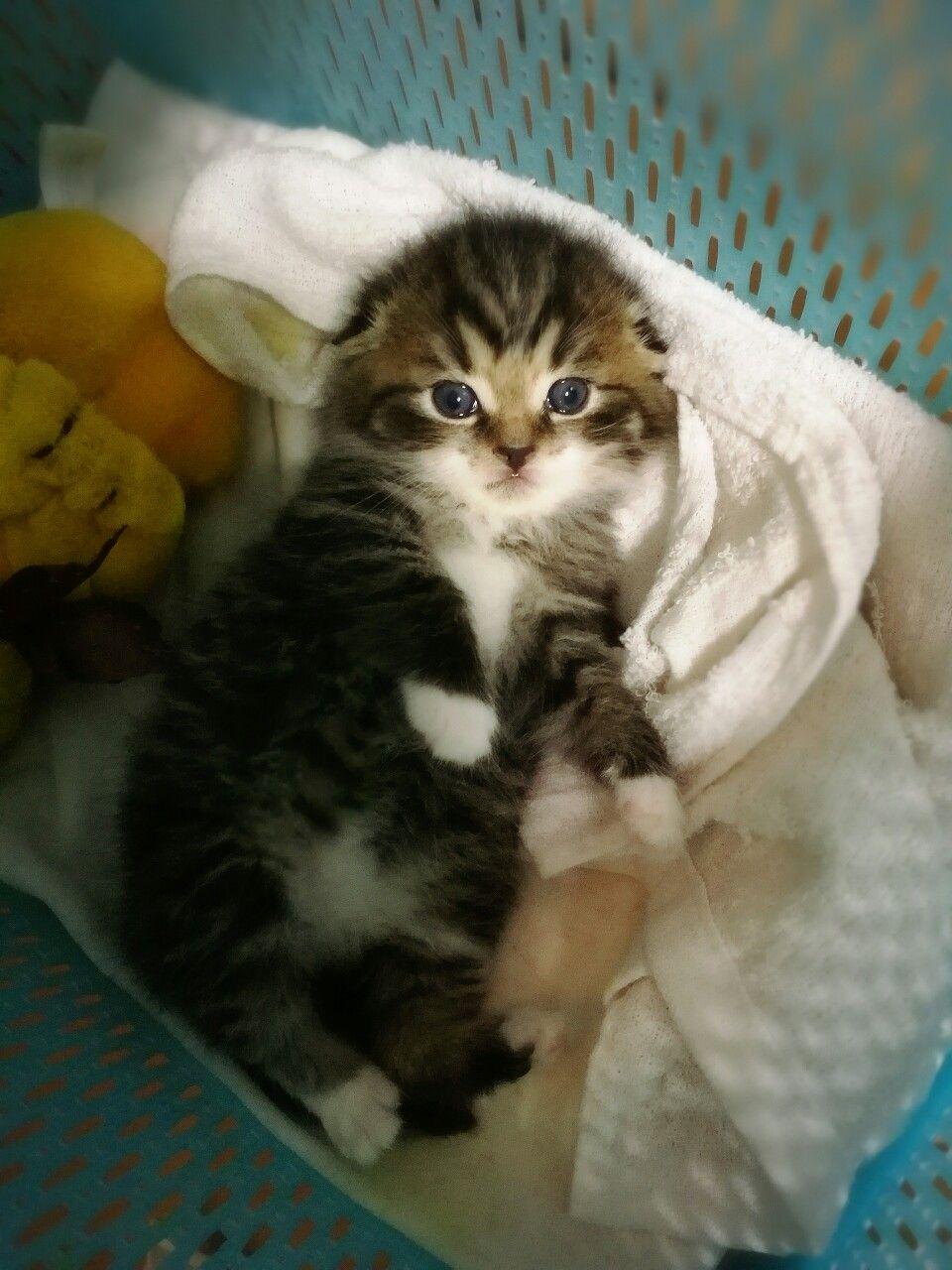 Nicky sweet kitty asian | Hot foto)