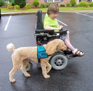 Don T Avoid Real Dog Training Working Dogs Service Dogs Work