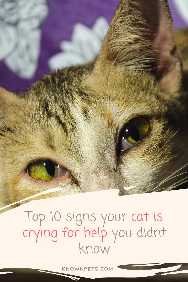 Top 10 Signs Your Cat Is Crying For Help You Didnt Know Cry For Help Cats Cat Facts