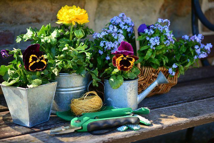 Jardim, Flores, Plantar Flores | Zpin | Pinterest