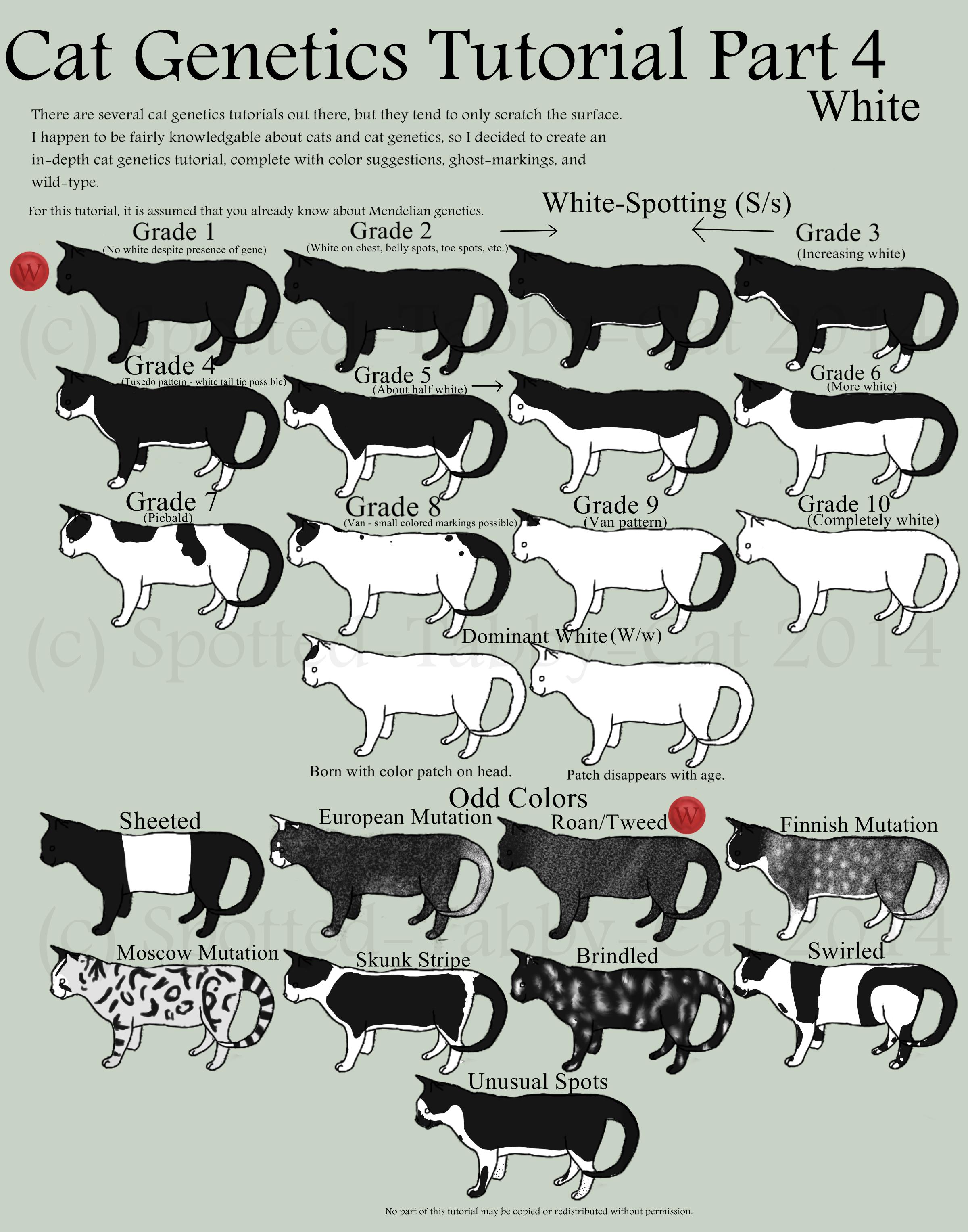 small resolution of cat genetics tutorial part 4 white by spotted tabby cat deviantart com on deviantart