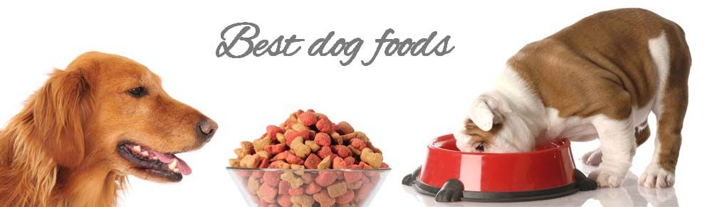 Best Dog Foods Can Give Your Dog Proper Nutrition Also A Healthy