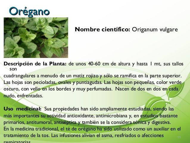 Imagen Relacionada Imagenes De Plantas Plantas Medicinales Plantas