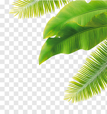 Fruit Flower Green Leaves Green Banana Leaves And Coconut Tree Leaves Free Png Watercolor Leaves Coconut Leaves Leaves