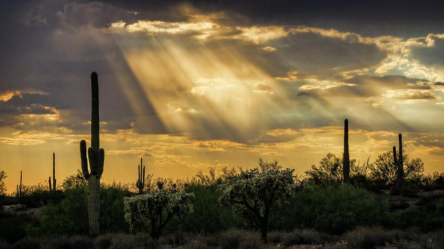 Saguaro Sunset Photograph - Let The Light Shine Through  by Saija Lehtonen