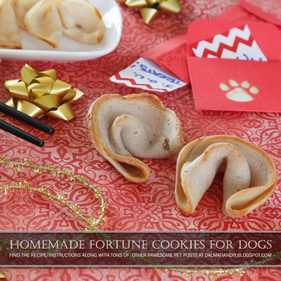 Recipe Chinese New Year Dog Fortune Cookie Dog Cookies Fortune