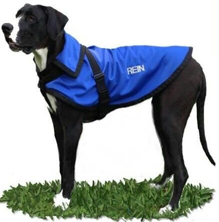 Rein The Great Dane Thereincoat Itworks Chillout