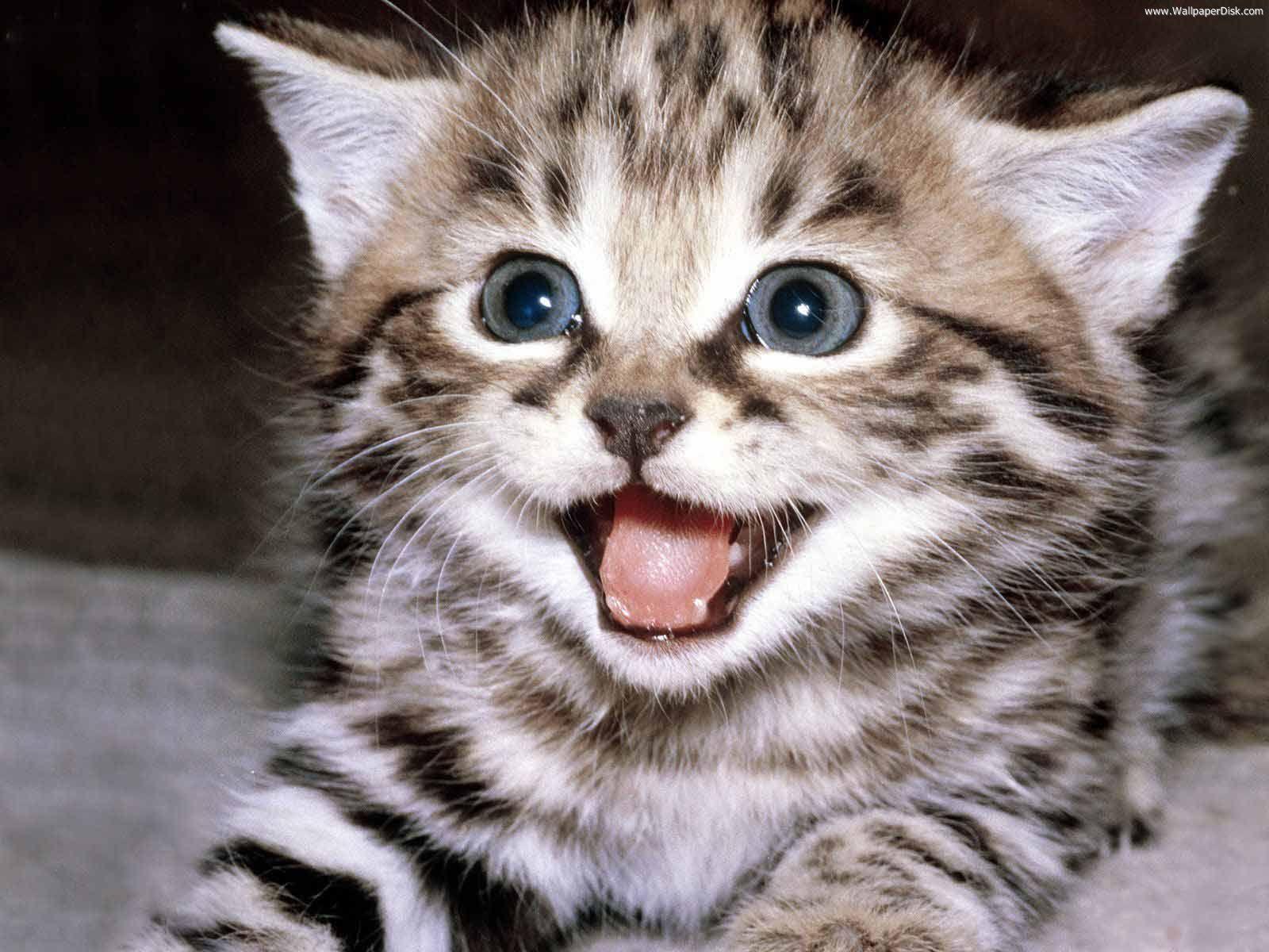 Http Www Wallpaperdisk Com Wallpapers Animals And Birds Smiling 20cat Jpg Kittens Cutest Funny Cat Wallpaper Happy Kitten