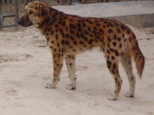 Leopard!!!!