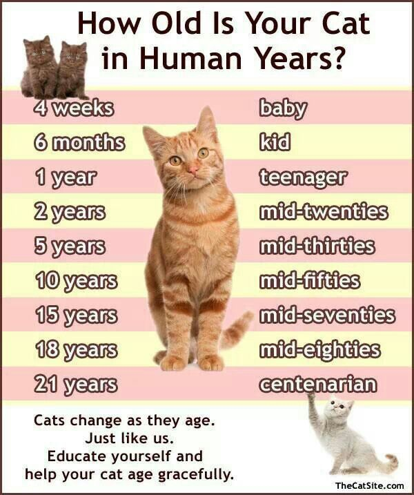 Cats Age