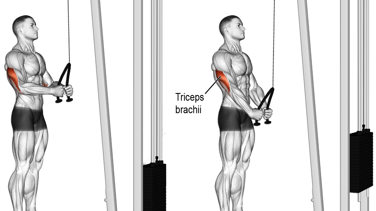 Triceps rope push-down exercise | rutinas | Pinterest | Ejercicios ...