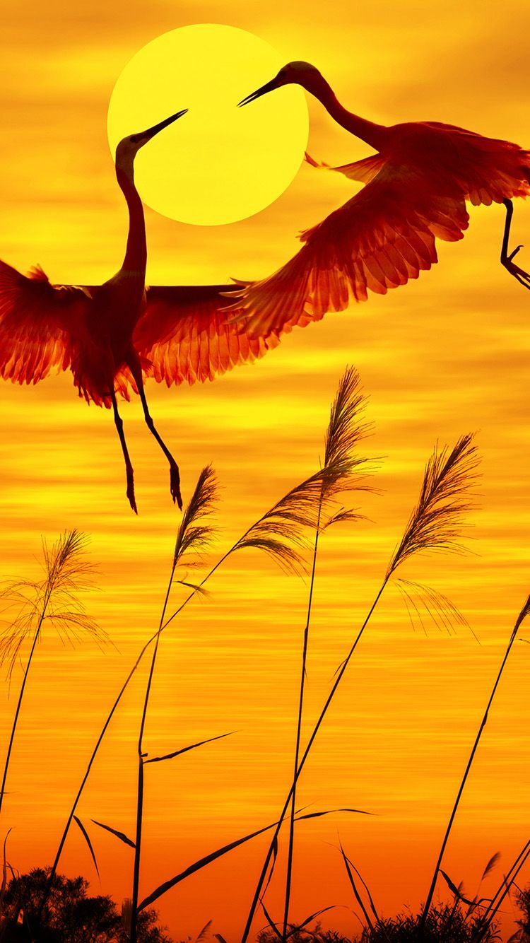 Iphone Lock Screen Wallpaper Beautiful Birds Birds Animals Beautiful