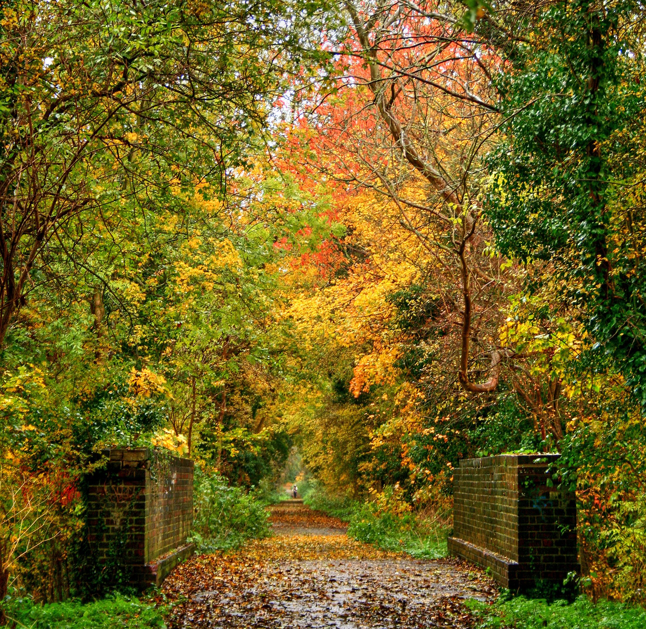 Located In The Capalbio Countryside Which Is In The: The Bridge Over Ox Lane....Rainy Morning