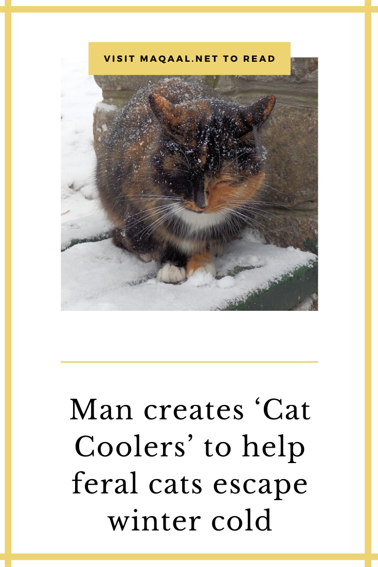 Man Creates Cat Coolers To Help Feral Cats Escape Winter Cold Feral Cats Cats Winter Escapes