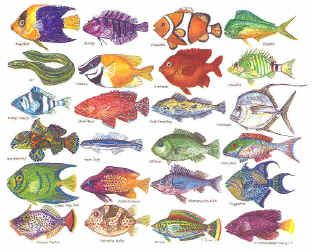 Types of tropical aquarium fish - photo#24