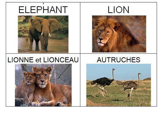 Imagier D Afrique Imagier Animaux Animaux Afrique Animaux De La Savane