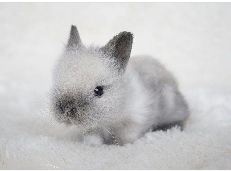 Small Bunny Cute Baby Bunnies Cute Animal Drawings Dwarf