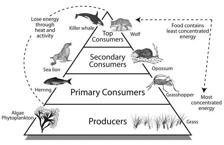 Blank Energy Pyramid