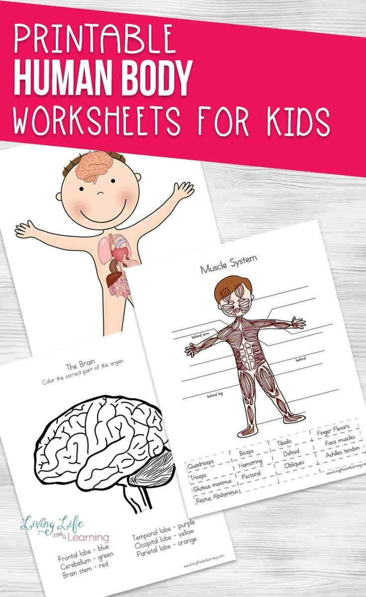 Human Body Worksheets for Kids | Human body activities ...