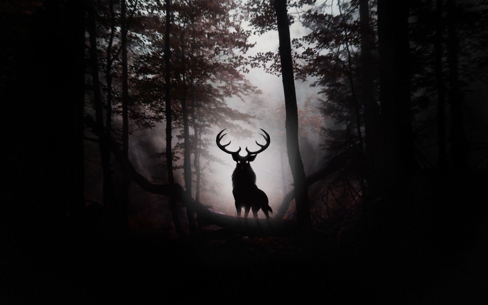 The dark forest photography reveals the skill and