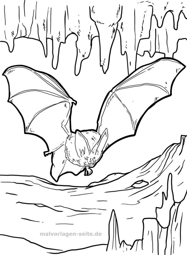 Malvorlage Fledermaus Tiere - Kostenlose Ausmalbilder