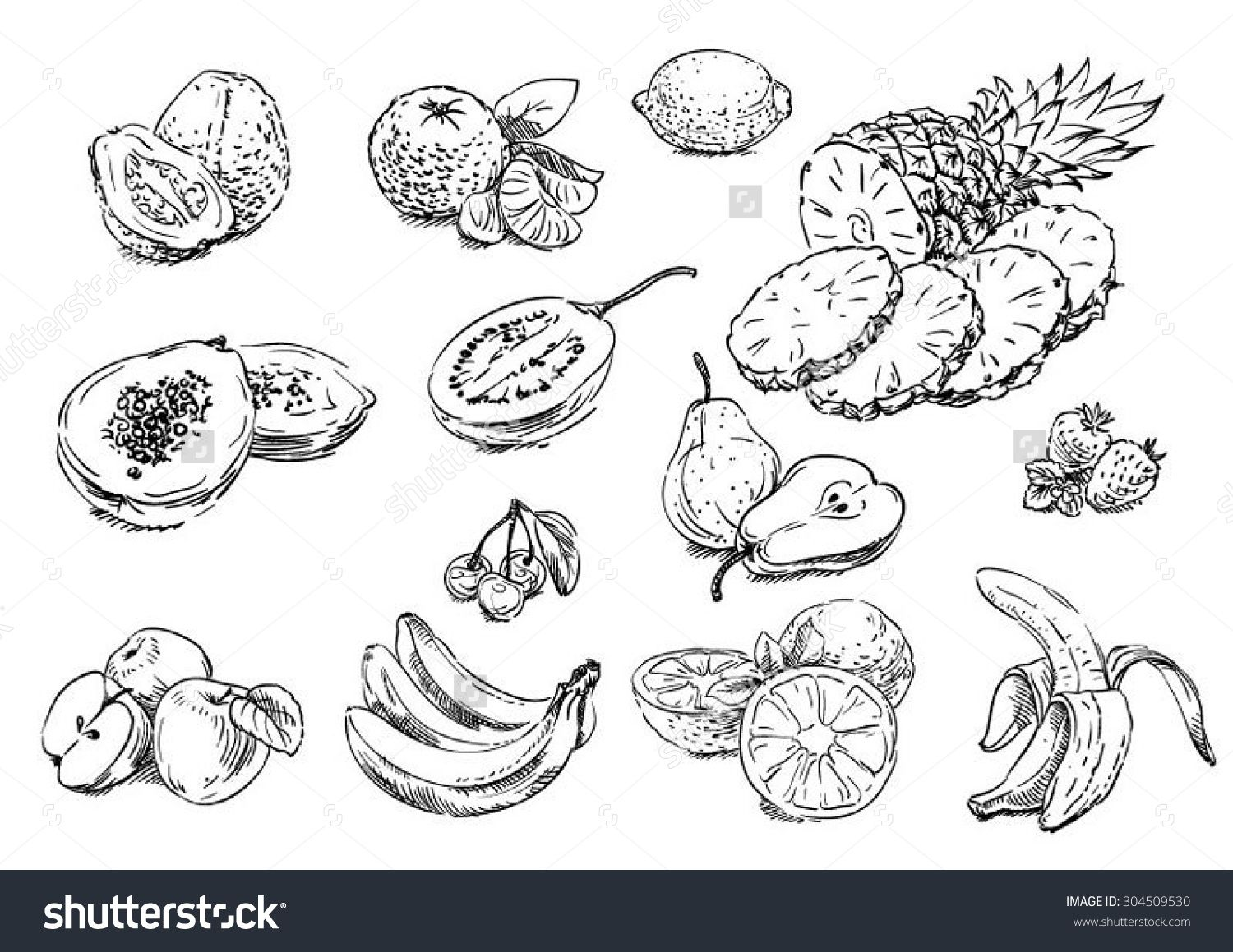 Sketches Of Food: Fruits Stock Vector Illustration 304509530 ...