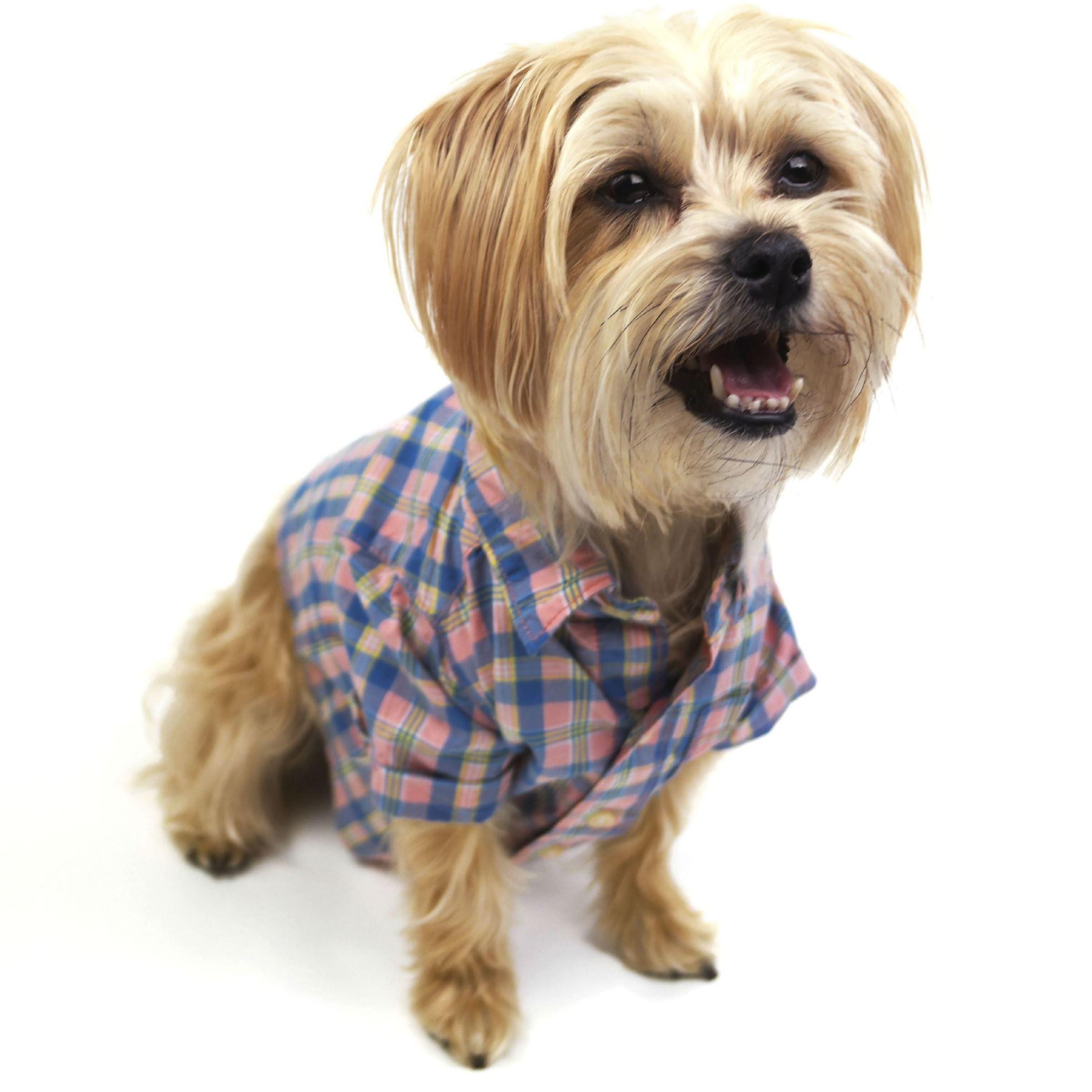 Greensboro Nc Maltese Mix Meet Snowbelle A Dog For Adoption Http Www Adoptapet Com Pet 18576504 Greensboro North Carolina Maltes Dog Adoption Dogs Pets
