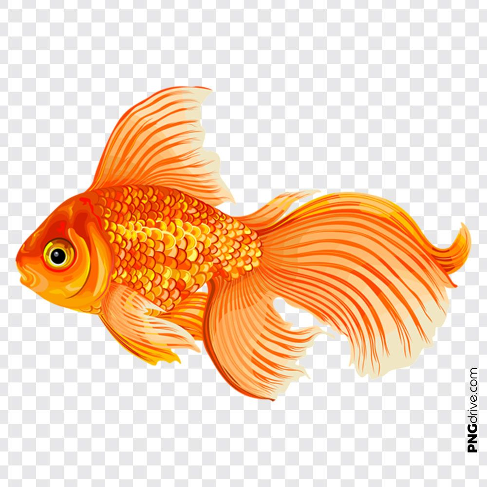 Pin By Png Drive On Gold Fish Png Golden Fish Molly Fish Fish Clipart