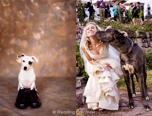 Wedding Photography Ideas Fun With Dogs And Pets In Weddings Andportraits Entries Creati