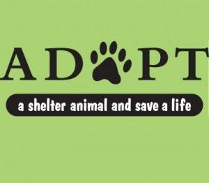 Consider adopting a dog or cat, especially a senior dog/cat so they may live the remainder of their years in a loving home. You will receive so much more than you put in.