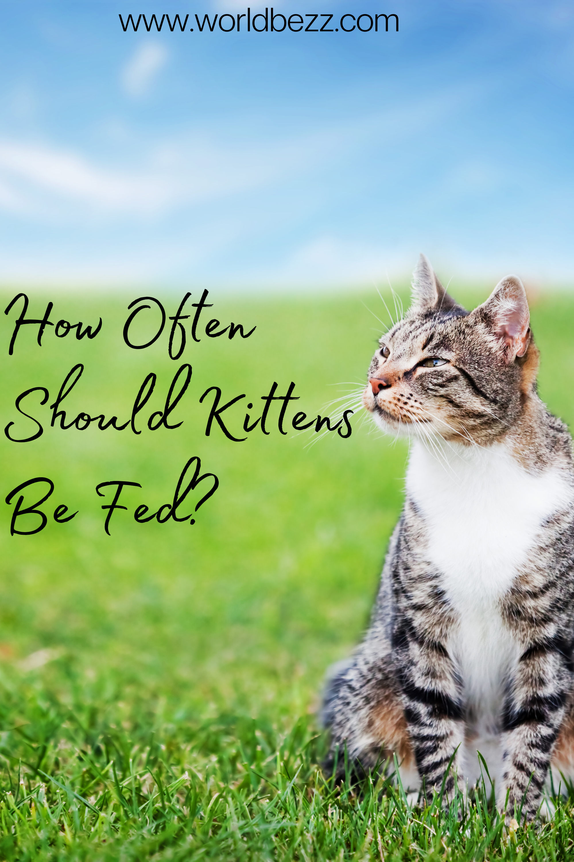 How Often Should Kittens Be Fed In 2020 Kittens Cats Cat Life