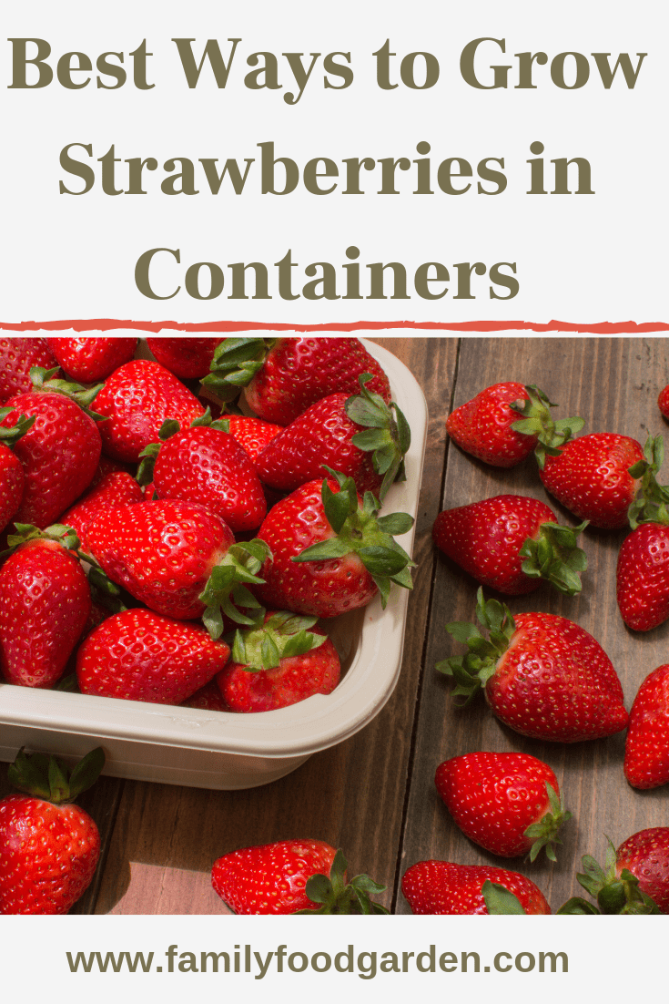 Best Ways To Grow Strawberries In Containers 2020 Growing Strawberries Strawberries In Containers Container Gardening Vegetables