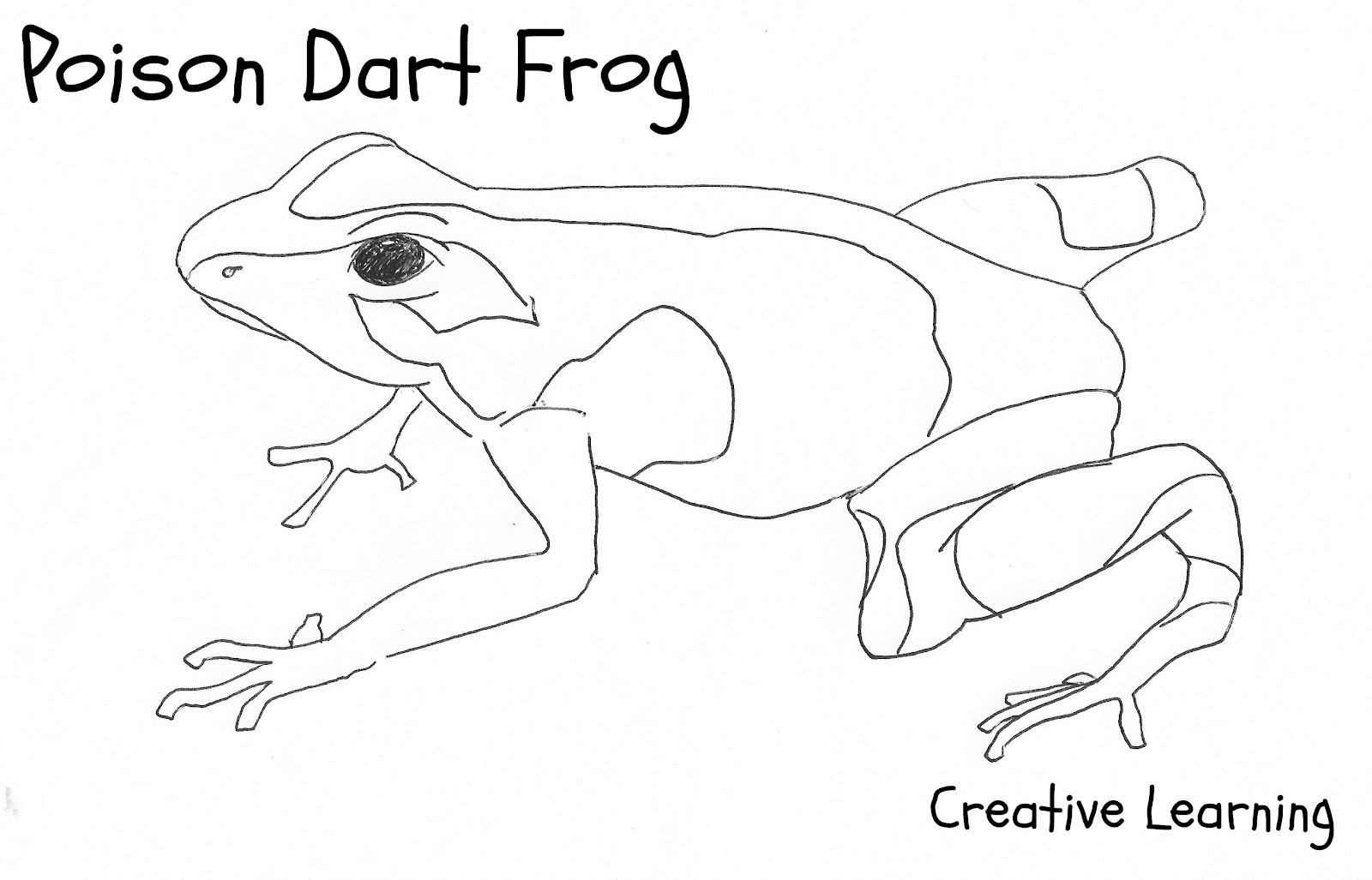 Images For Gt Simple Frog Drawing Frog Coloring Pages Frog