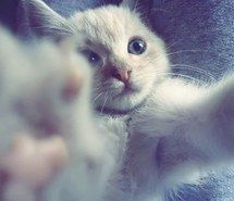 Inspiring picture awesome, beautiful, selfie, cat, cute, perfect. Resolution: 403x302. Find the picture to your taste!