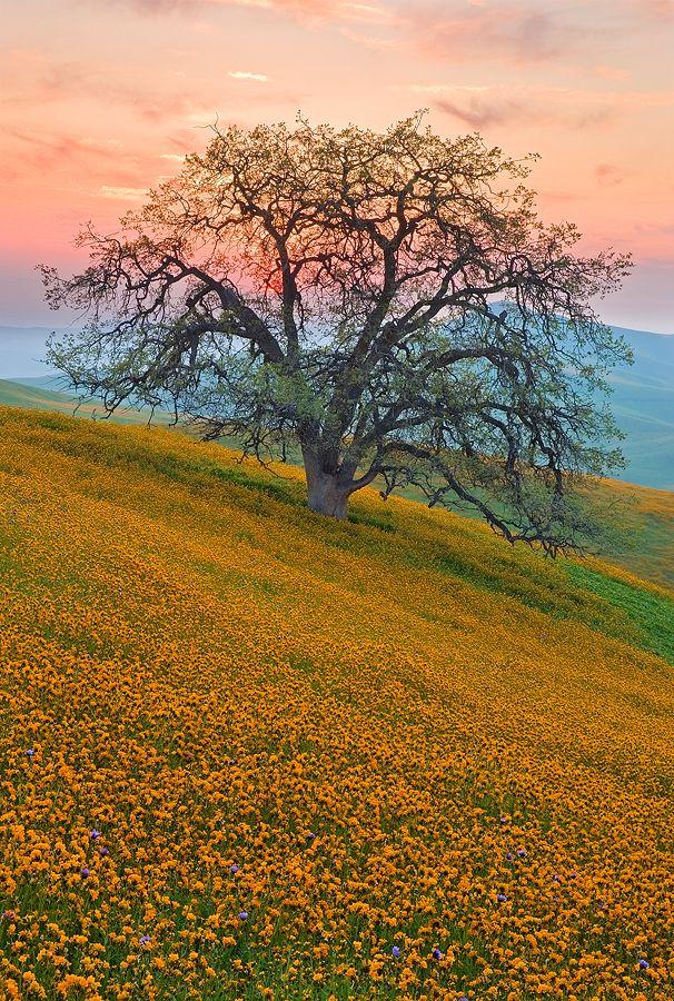 Guardian Of The Foothills Photo By Photographer Mark Geistweite Schone Natur Naturfotografie Landschaftsbau