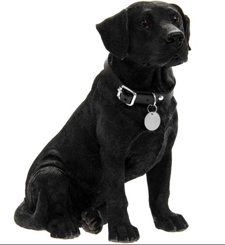 Black Labrador All About Labrador Retriever Black Labrador Dog Labrador Dog Black Labrador