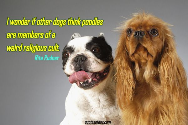 I wonder if other dogs think poodles are members of a weird religious cult. | quotesofday.com