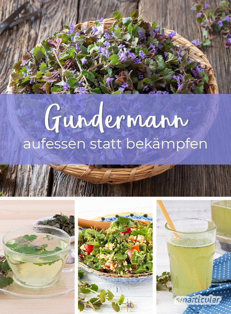 Photo of Gundermann in the garden: not a weed, but useful for the kitchen and health